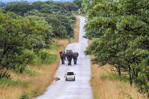KrugerParkREIZ&HIGHRES-9