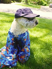Tourist (Eric.Ray) Tags: dog lover tourist challenge maggiemae canon