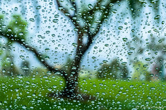 Rainy Day #7733 -  [Explore - May 9, 2017] (www.karltonhuberphotography.com) Tags: 2017 abstract altisimapark horizontalimage karltonhuber landscape nature outdoors park peaceful raindrops raining rainyday ranchosantamargarita southerncalifornia tree windshield