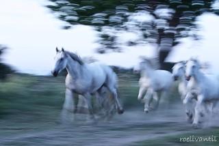 Paarden/Horses(7)