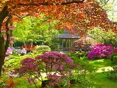 The Japanese garden of The Hague (Frans Schmit) Tags: clingendael japanesegarden japansetuin fransschmit forsythia color kleur denhaag thehague trees wonderfulworldofflowers