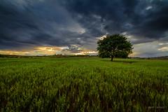 Impasible (AvideCai) Tags: avidecai atardecer sigma1020 sobarriba arbol nubes cielo paisaje