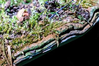 Old Woodland Fungi. HMM