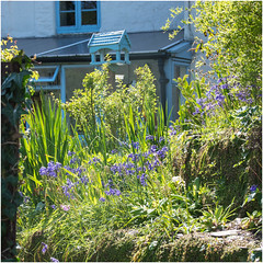 Photo of Bowcombe Garden