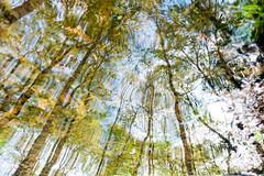 20160514 (Homemade) Tags: puddle water reflection trees spring sonydscrx100 eastwoods eastwoodspreserve poundridge newyork westchestercounty ny