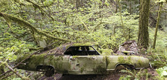 Ford Galaxie 500 (Curtis Gregory Perry) Tags: portland oregon ford galaxie 500 1969 green old abandoned car 69 forest park forestpark woods trees nature junk decay debris abandon abandonment pdx northwest panorama nikon d810 24mm