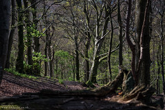 Lost in the Woods (DJNanartist) Tags: nikond750 nikon28300mm lakedistrict anartist derwentwater cumbria