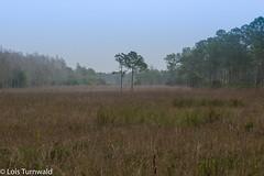 Trees in the Mist - HTMT (11Jewels) Tags: canon 70300 mist trees corkscrewswampsanctuary naplesfl treemendoustuesday florida landscape