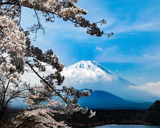 2017 Fuji and Sakura