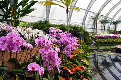 JARDINES DE MEXICO (fco_galan34) Tags: jardines mexico naturaleza natural morelos paisajismo ecosistemas flores colores plantas arboles orquidea