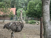 Zoo-Eberswalde_e-m10_1007176874 (Torben*) Tags: rawtherapee olympusomdem10 olympusm1442mmf3556iir zoologischergarteneberswalde eberswalde zoo familie straus ostrich