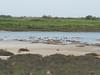 Flamingos (Nikos Karatolos) Tags: kalochori thessaloniki delta axiou greece mussel houses abandoned samyang 50mm f12