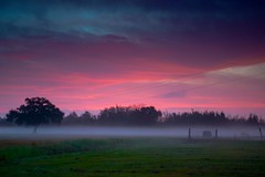 Misty dawn (GOJR.) Tags: landscape color morning dawn misty nature