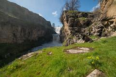 White River Falls (Justin Knott) Tags: water fall nikon d800 white river falls dogs sunny oregon wide angle rokinon