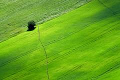 Scorcio primaverile (luporosso) Tags: natura nature naturaleza naturalmente nikond500 nikonitalia imdifferent albero tree verde green scorcio country countryside marche italia italy minimal minimalismo minimalism