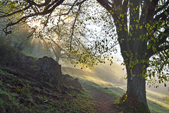 Dollnstein (Pixelkids) Tags: dollnstein altmühltal morgen baum linde natur landschaft breathtaking breathtakinglandscapes sonnenstrahlen sonnenaufgang