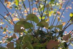 nEO_IMG_DSC03317 (Bryan Shan@) Tags: sony a55 sonya55 tamron tamronsp2448mmf3538 sp 2448mm f3538 model13a flower 花 plant 植物