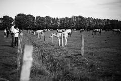 ... (Eera Photography) Tags: 50mm outdoor availablelight naturallight horse horses foal blackandwhite monochrome pferde fohlen wildpferde wildhorses