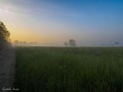 Alba nebbiosa di Aprile (gaddi_luca) Tags: flickrsbest nebbia alba sunrise cavriago campagna aprile gelo primavera tardiva