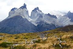 Torres del Paine near Salto Grande (EagleEye8) Tags: torresdelpaine patagonia chile harshadsheth eagleeye8