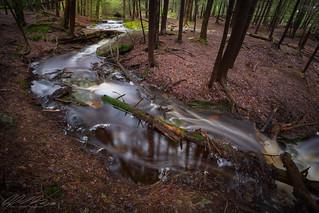 The Spring Stream