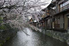 DP2M4638 (bethom33) Tags: sigma dp2merrill dp2 merrill kyoto cherryblossom japan sakura