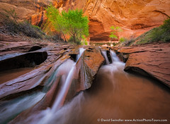 Canyon Country (David Swindler (ActionPhotoTours.com)) Tags: trees utah waterfall canyon redrock grandstaircase escalante swisscheesefalls coyotegulch