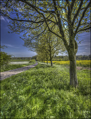 The Road to Cottesbrooke 3 (Darwinsgift) Tags: cottesbrooke daventry northampton northamptonshire road naseby spring oil seed rape field cowslips hdr pce nikkor 24mm f35 nikon d810 photomatix photo merge stich