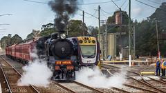 Steam train to Warragul and Traralgon (smjbk) Tags: steamrail traralgon railway steamtrain train victoria australia a2986