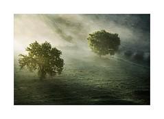 Fog Light (W.Utsch) Tags: trees tree baum nebel fog nebbia mist brume toscana tuscany landscape nature moning light morninglight morgenstimmung landschaft sony a7rii