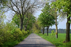 spring as it is (JoannaRB2009) Tags: spring green tree trees path road alley avenue sunny małyń puczniew łódzkie lodzkie polska poland landscape view nature