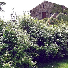 Photo (fischettiwine) Tags: from here wine moscamentoestate sicily etnawine tour location party exclusivelocation winetasting wineblog foodandwine topquality etnadoc numberonthebottle restaurant sommelier eno resort wineyards alberello nerellomascalese carricante red whitewine rosato naturalwine follower taste muscamentoetnadoc