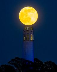 Moon (davidyuweb) Tags: moon full fullmoon 三藩市 sfist big sanfrancisco coit tower coittower