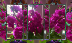 Scented Stocks (abstractartangel77) Tags: stocks flowers fractal frames