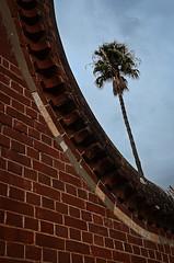 Walled Palm (J Allan-1) Tags: zed ward asylum mental defective