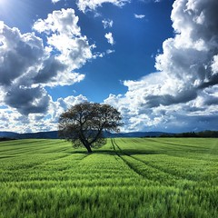 In the middle of the green and the blue 🌳 [in Explore 19.05.2017] (Pascal Dentan) Tags: lausanne region echallens oulens landscape trail wandering wanderlust schweiz suisse middle sky blue green inlove hiking explore discover nature life tree switzerland