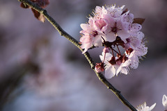 Flor / Flower (Sandra Tiemblo) Tags: flor floracion macrofotografía árbol tree flower macro nikon d3300
