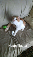 Happy Easter from Ginger Kitty!! - The Caturday (TheCaturday) Tags: caturday kittens kitty cat cats kitten cute catsagram catsoftwitter catsofinstagram
