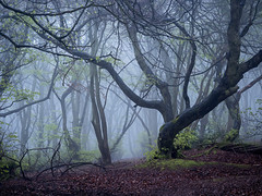 Last Dance (Damian_Ward) Tags: ©damianward damianward oxfordshire trees chilterns chilternhills thechilterns fog mist