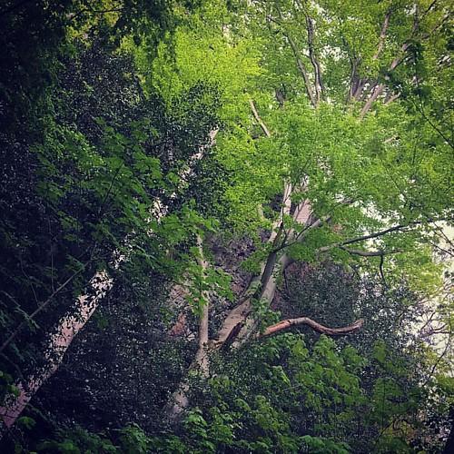 В Шварцвальдском лесу с @khrebtukova