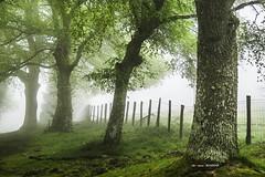 Urkiola (Jabi Artaraz) Tags: jabiartaraz jartaraz zb urkiola niebla frío árboles primavera udaberria landscape basquelandscape amazing askatasuna ast