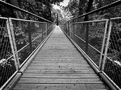 Bridge (heinzkren) Tags: brücke hängebrücke bridge flickrfriday zoo schönbrunn wien vienna baumkronenpfad tiergarten symetry geometry lines linien architecture architektur panasonic olympus weitwinkel bw blackandwhite schwarzweis biancoetnero noiretblanc monochrome austria österreich geometrie symetrie geländer railing