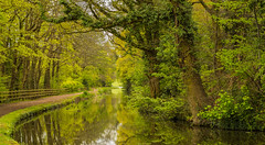 The Reason I Keep Going Back To the Canals (williamrandle) Tags: fence stourbridgebirminghamcanal canal waterways uk england worcestershire spring 2017 water reflections towpath bend trees woods woodlands green peaceful serene beauty tranquil path nikon d7100 tamron2470f28vc landscape outdoor