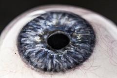 Eye Caramba (apg_lucky13) Tags: macro eye eyes mm macromondays hmm prosthetic lifesize 11 kenko kenkoextensiontubes canon 40d 1855mm blue iris round curved upclose ca indoors lookingup jdc jasdaco jason