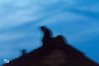 Blurring is not a sin (madtacker) Tags: katze tier dach wohnung strasse himmel dämmerung silhouette blau schwarz nikon d2x