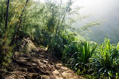 Kaui 213 DSC03708 (cpburt) Tags: kauai hawaii napalicoast kalalautrail trail fog