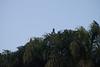 Guacamayas azulamarillo, Paseo Los Proceres (Caracas / Venezuela) (jsg²) Tags: caracas paseolosproceres ccs distritocapital grancaracas distritometropolitanodecaracas áreametropolitanadecaracas alcaldíamayordecaracas santiagodeleóndecaracas américadelsur sudamérica suramérica américalatina latinoamérica caracasinversa caracasinversaoeste jsg2 fotografíasjohnnygomes johnnygomes fotosjsg2 municipiolibertador venezuela parroquiaelvalle guacamaya guacamayoazulyamarillo papagayoamarillo parabaazulamarillo guacamayoazulamarillo blueandgoldmacaw guacamayos araararauna ara blueandyellowmacaw ipfa fuertetiuna vitoriopoggi