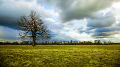 Winter landscape (spencerrushton) Tags: spencerrushton spencer sun sky rushton canon canonlens canonl colour 5dmkiii canon5dmkiii outdoors nature uk walk wood windsor windsorgreatpark plant park tree trees wide green grass oaktree shadow dslr dayout daylight day dof dethoffield 2017 clouds outside 1635mm