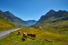 Col du Julier (Meinrad Périsset) Tags: cantondesgrisons grisons graübunden paysages landscape alpessuisses swissmountains switzerland suisse schweiz swizzera nikon nikond800 d800 captureone10