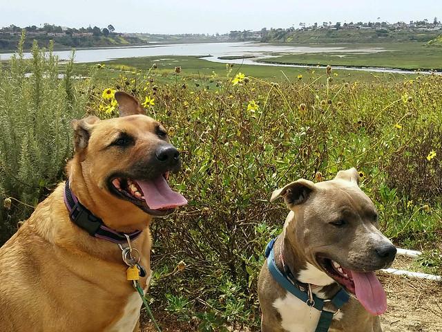 男女別犬好きの人の性格や心理・猫好きとの相性や性格の違い
